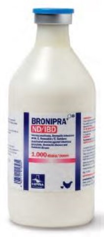 Bronipra-ND, 1000 DS